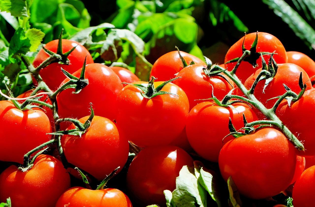 Tomaatjes voor hele straat? 'Een succes, maar we hebben ervan geleerd'