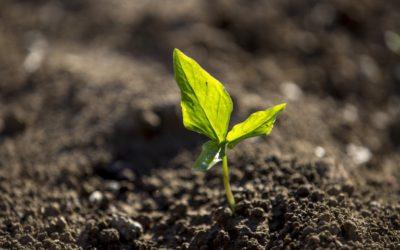 Tijdelijke oplossing voor onverkoopbaar product door droogte