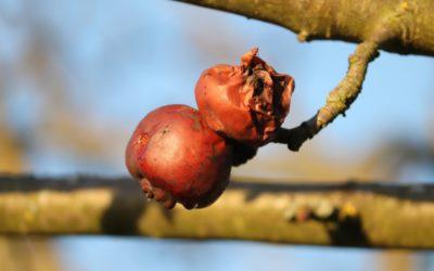 Onderzoekers ontwikkelen sticker om rotting fruit tegen te gaan