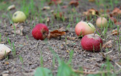 EU helpt lidstaten voedselverspilling te meten