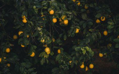Tilburgse Rosemarijn plukt fruitbomen in tuinen om verspilling te voorkomen