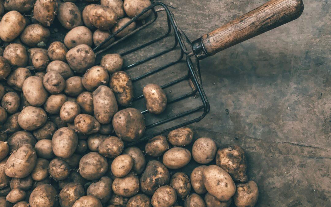 Aardappelen weggegooid door coronacrisis