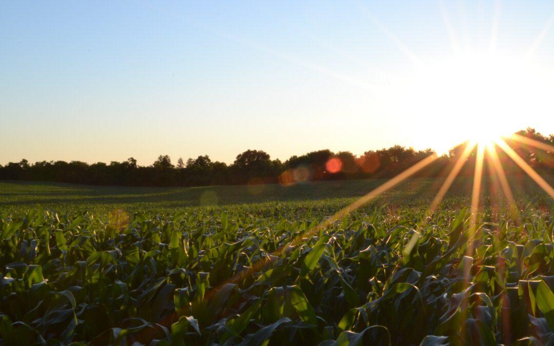 Zuid-Holland vermindert voedselverspilling