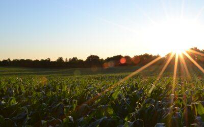 Provincie Zuid-Holland vermindert voedselverspilling
