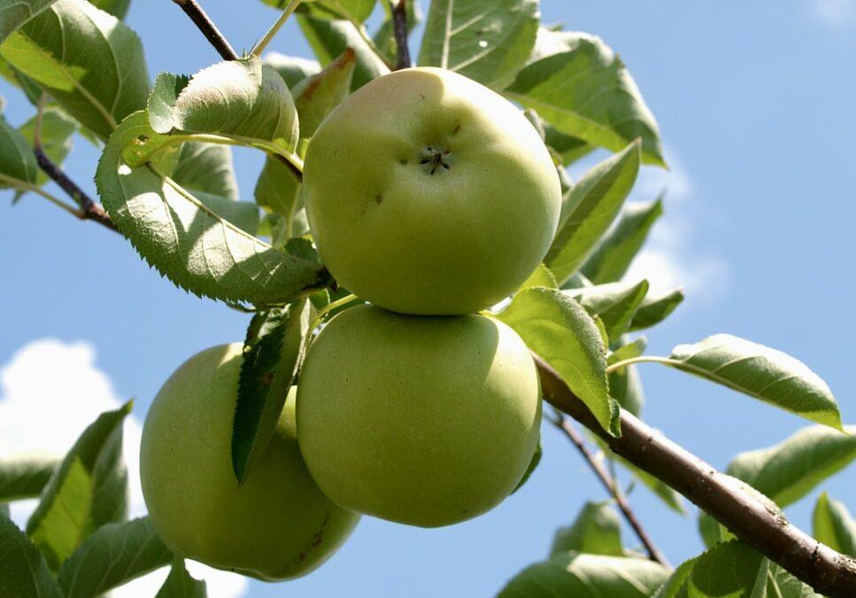 Bewaaradvies Tool helpt appel- en perentelers